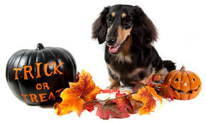 dog-halloween