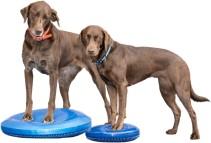 Balance-Disks-Dogs